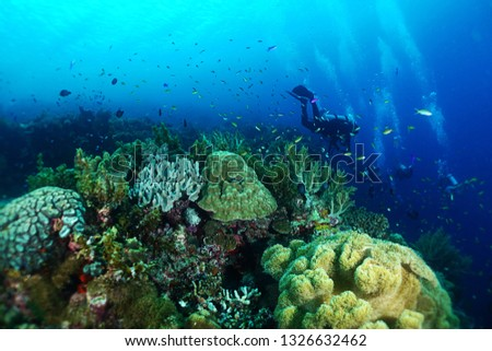 cebu scuba diving                             #1326632462