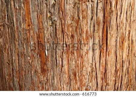 Cedar Bark - stock photo
