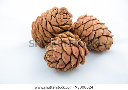 Cedar-cone