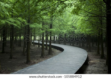 cedar forest with curving wood road in a park