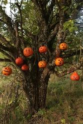 Celebration of Halloween: jack-o'-lantern on tree. Halloween decor with pumpkins. Holiday decoration. Horror. Halloween smiling jack-o'-lantern. Halloween mood, party. October. Creepy jack-o'-lantern