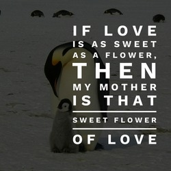 Celebration of mother's day, best quotes to tribute parents, penguins in the background, beautiful stock wallpapers and photos