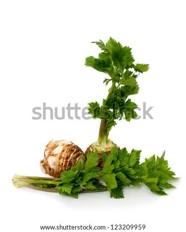 celery isolated on white background
