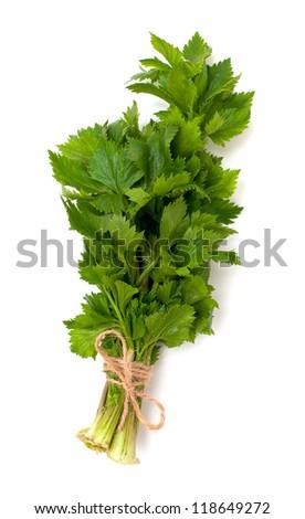 celery on white background