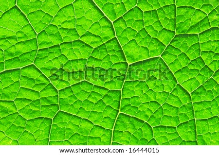 Leaf Cell Diagram http://www.shutterstock.com/pic-16444015/stock-photo-cell-structure-of-leaf.html