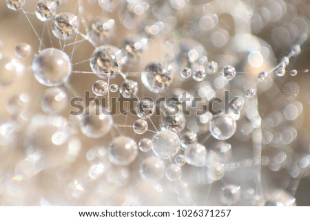 Cells, drop of water in nature, connected with water fiber, close up macro view, water is life, Slovakia