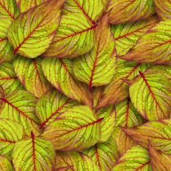 Celosia leaves seamless pattern. Chaotic arrangement of leaves. Bright juicy greens. Surface covered with leaves.