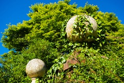 cement ball gate post tops covered in ivy with a green tree and blue sky in the background