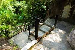 cement steps and a post and wire handrail going down hill with jungle plants in the background