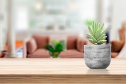 Cement Vase with Succulent on vase pot on table in living room