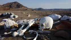 Cementario de Chauchilla, Graveyard in the Peruvian desert of Nazca. Human Skull and Bones
