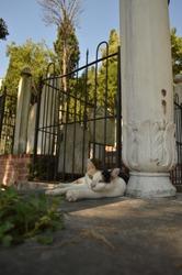 cemeteries and cats, Istanbul Besıktas