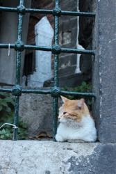 cemetery keeper cat in istanbul