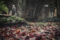 Cemetery wood autumn man