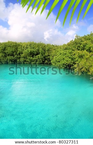 cenote mangrove with clear turquoise water in Mayan Riviera Mexico [Photo Illustration]