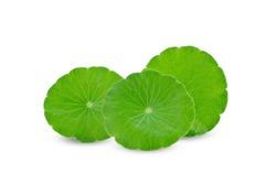 Centella asiatica leaf on white background