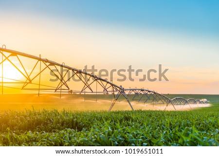 Center Pivot Irrigation System in Cornfield