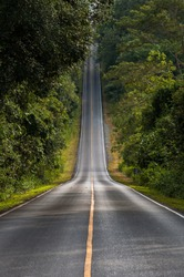 centered road leading symmetrical through a valley in the Thai jungle in the region of Khao Yai