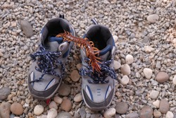Centipede getting in a kid shoe / The Silence danger of poisonous animal.
