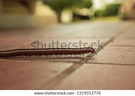 centipede on the sidewalk #1219013770