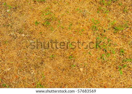 Central Italy Summer Drought Conditions Texture.