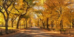 Central park in autumn with beautiful autumn foliage, New York City, USA