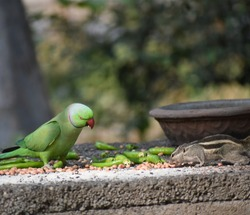 Central park, New York, Usa-a parrot and a squirrel which shows friendship has no boundaries