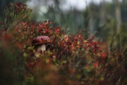 Cep mushroom in the autumn forest - perfect macro details