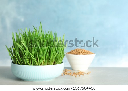Ceramic bowl with fresh wheat grass on table against color background, space for text #1369504418