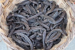 Ceratonia is a sweet and very healthy bean fruit. The seeds in the pods all have the same weight and were used in antiquity as a measure of weight in valuing jewelry.