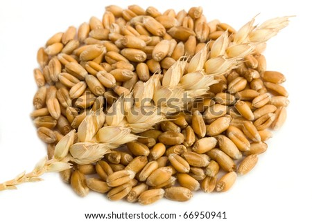 Cereal and wheat spike isolated on white background