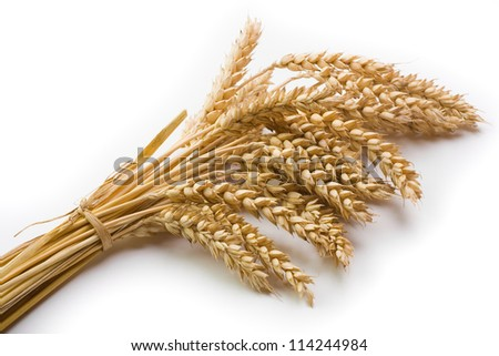 Cereal and wheat spike on bright background