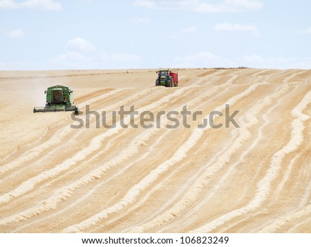 cereal newly harvested fields