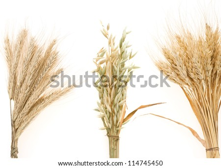 cereals ears isolated on white background