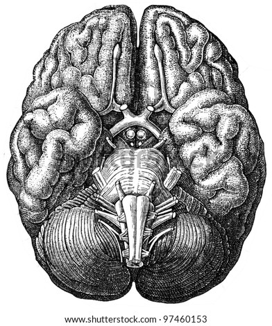 cerebrum - an illustration of the encyclopedia publishers Education, St. Petersburg, Russian Empire, 1896