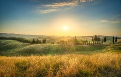 Certaldo canonica park at sunset. Rolling hills landscape and cypress tree row. Florence, Tuscany, Italy
