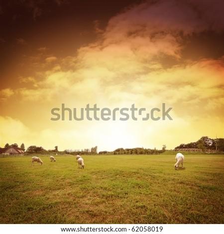 cg background of farm image