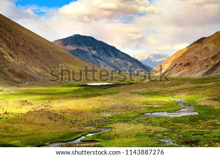 Chagar tso, little lake on the way to Pangong lake, Ladakh, kashmir, India #1143887276