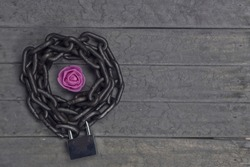Chained and locked pink rose on the wooden background