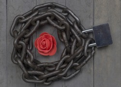 Chained and locked red rose on the wooden background. Studio top view shot