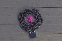 Chained and locked violet rose on the wooden background