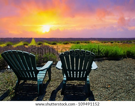 Chairs on a lavender field in bloom during sunset - stock photo