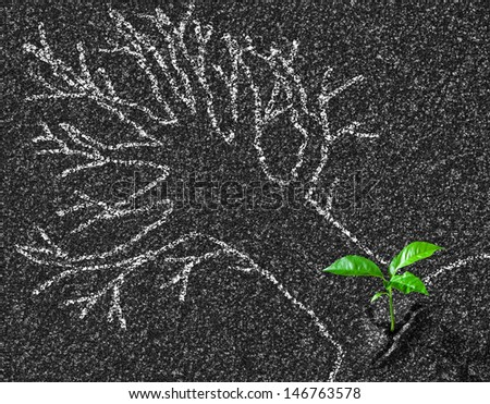 Chalk contour of tree on asphalt road and young growth concept