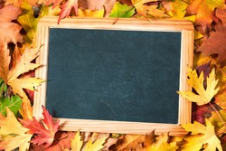 Chalkboard and autumn maple leaves as background