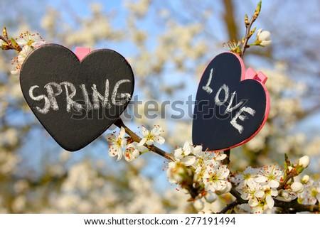 Chalkboard heart spring love, flower