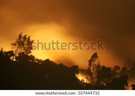 CHALKIDIKI, GREECE - AUGUST, 21 : Forest fire disaster on August 21, 2006 in Chalkidiki Peninsula, northern Greece