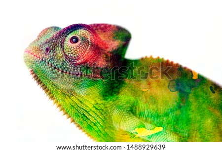 chameleon - and water colors stock photo