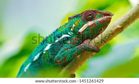 Photo of  Chameleon 4K Wallpaper - Portrait 4K Wallpaper