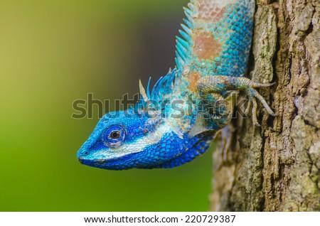 Shutterstock Chameleon on the tree