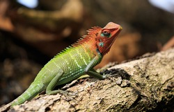 chameleon on tree in tropical forest